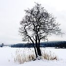 Winter mood by globeboater
