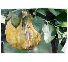 lemon in spring Poster