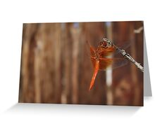 Red Dragonfly Side View Greeting Card