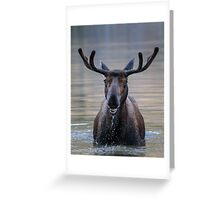 Friendly Moose Greeting Card