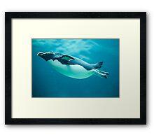 Fiordland Penguin Framed Print