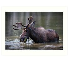 Munching Moose Art Print