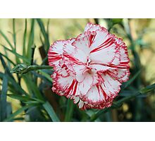 colored flowers in spring Photographic Print