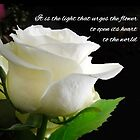 It is the light that urges the flower to open its heart to the world. by Barbny