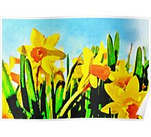 Daffodils By Morning Light Poster