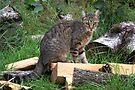 Toppie Cat by Jo Nijenhuis