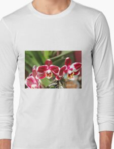 orchid bloom Long Sleeve T-Shirt
