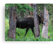 Moose in the Woods Canvas Print