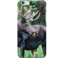 Moose in Wildflowers iPhone Case/Skin
