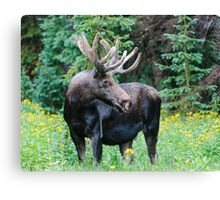 Moose in Wildflowers Canvas Print