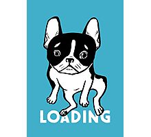 Bored Frenchie Photographic Print