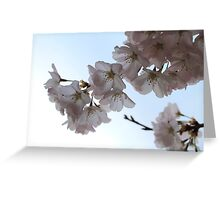Cherry blossoms, Washington DC Greeting Card
