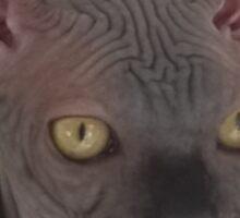 Rock black sphynx cat Sticker