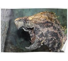 Alligator snapping turtle Poster