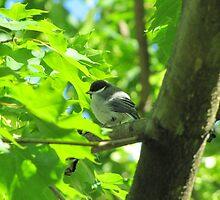 Cute baby bird on branch by PVagberg
