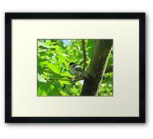 Cute baby bird on branch Framed Print