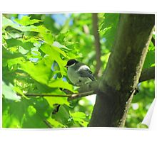 Cute baby bird on branch Poster