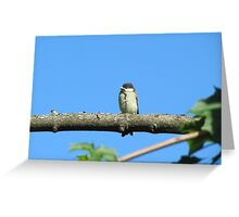 Angry baby bird on branch Greeting Card