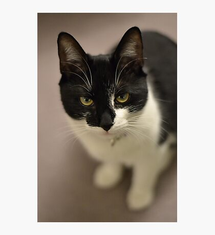 Unimpressed cat Photographic Print