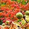 OCTOBER AVATAR ~ The Beauty of Autumn