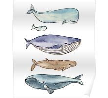 whales family Poster