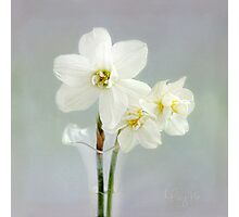 The Poet's Daffodils Photographic Print
