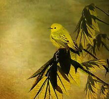 Yellow Warbler by swaby