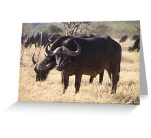 African Cape Buffalo with Two Oxpeckers on His Face Greeting Card