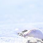 Seashells by the sea shore by missmoneypenny