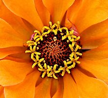 Bright Orange Petals by T.J. Martin
