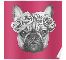 French Bulldog with roses Poster