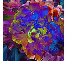Midnight Floral Photographic Print