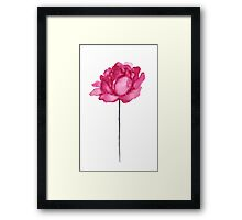 Peony Floral Watercolor Painting Illustration Magenta Pink Flower Framed Print