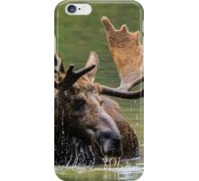 Wild Moose in Colorado iPhone Case/Skin