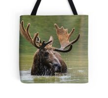 Wild Moose in Colorado Tote Bag