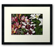 Lily Variety Framed Print