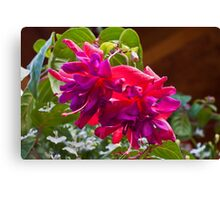 Pink And Purple Fuschia Blossoms Canvas Print
