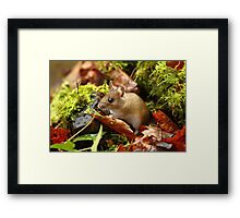 Life In Miniature Framed Print