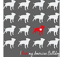 I love my American Bulldog - breed dog Photographic Print
