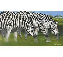Who's on Guard ? Zebras ?? Photographic Print