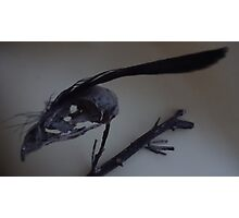 Last dead bird skull burning with a black flame feather Photographic Print