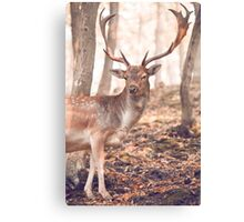 King of the Forest 1 Canvas Print