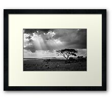 sunset with silhouette of a tree Framed Print