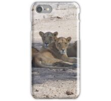 Four Lionesses Shading Themselves iPhone Case/Skin