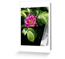 Lone Beach Rose Greeting Card