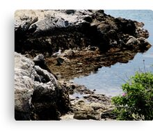Master of the Cove Canvas Print