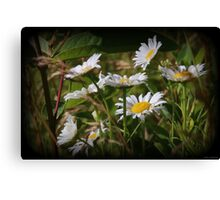Sun Soaked Blooms Canvas Print