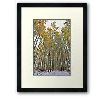 Aspens #4 Framed Print