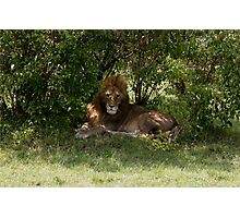 Lion in Kenya, Africa Photographic Print