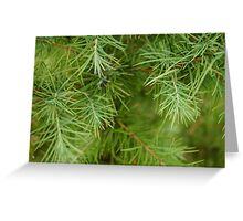 Larch Needles Greeting Card
